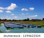 the farming of freshwater... | Shutterstock . vector #1194622324