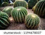 Cactus  Cactus Thorns  Close U...
