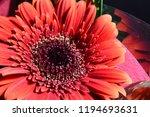 red flowers bouquet | Shutterstock . vector #1194693631