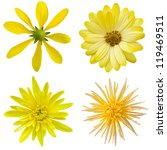 collage of isolated yellow... | Shutterstock . vector #119469511
