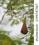 bird nest on the tree | Shutterstock . vector #1194747367