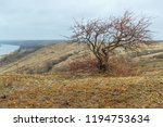 the old leafless tree in the... | Shutterstock . vector #1194753634