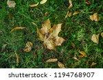 autumn leaves in park  | Shutterstock . vector #1194768907