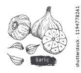 garlic collection  hand draw...   Shutterstock .eps vector #1194778261