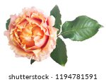 beautiful pink and orange color ... | Shutterstock . vector #1194781591