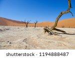 deadvlei in the namib naukluft... | Shutterstock . vector #1194888487