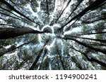 bamboo and pines forest | Shutterstock . vector #1194900241