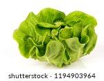butterhead lettuce vegetable... | Shutterstock . vector #1194903964