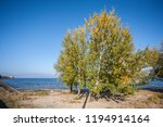trees with yellowed leaves on... | Shutterstock . vector #1194914164
