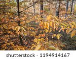 autumn forest  trees with... | Shutterstock . vector #1194914167