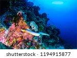underwater sea snake landscape. ... | Shutterstock . vector #1194915877