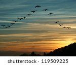 Stock photo flock of migrating canada geese flying at sunset in a v formation 119509225