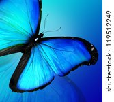 Blue Butterfly On Blue...