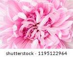 macro background of aster... | Shutterstock . vector #1195122964