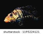 zebrafish   firefish  tastyfish ... | Shutterstock . vector #1195224121