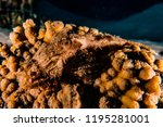 scorpion fish on the seabed  in ... | Shutterstock . vector #1195281001