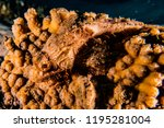 scorpion fish on the seabed  in ... | Shutterstock . vector #1195281004