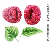 hand drawn watercolor raspberry ... | Shutterstock . vector #1195285654
