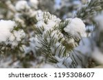 snow on the branches of a pine... | Shutterstock . vector #1195308607