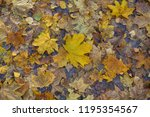 fallen autumn leaves on the... | Shutterstock . vector #1195354567