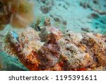 scorpion fish on the seabed  in ... | Shutterstock . vector #1195391611