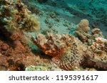 scorpion fish on the seabed  in ... | Shutterstock . vector #1195391617