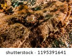 scorpion fish on the seabed  in ... | Shutterstock . vector #1195391641