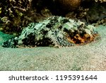 scorpion fish on the seabed  in ... | Shutterstock . vector #1195391644