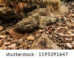 scorpion fish on the seabed  in ... | Shutterstock . vector #1195391647