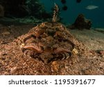 scorpion fish on the seabed  in ... | Shutterstock . vector #1195391677