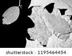 dry autumn leaves as a... | Shutterstock . vector #1195464454