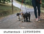 Stock photo dog walker with dogs enjoying in park 1195493494