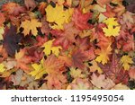 Small photo of Autumn leaves on the ground. Fall background concept. Maple, red, yellow foliage, September, October, November, Indian summer