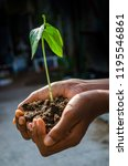 hand with plants   Shutterstock . vector #1195546861