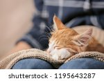 Stock photo woman with cute kitten at home closeup 1195643287