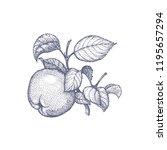 stippling botanical...   Shutterstock . vector #1195657294