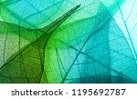 beautiful transparent leaves  | Shutterstock . vector #1195692787