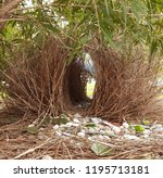 bower bird nest. | Shutterstock . vector #1195713181