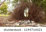 bower bird nest in garden. | Shutterstock . vector #1195714321