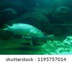 under water sea creatures | Shutterstock . vector #1195757014
