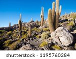 cactus on incahuasi island ...   Shutterstock . vector #1195760284