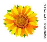 sunflower isolated on white...   Shutterstock .eps vector #1195798147
