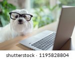 Dog With Glasses Using Laptop...