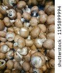 mushrooms champignons in black...   Shutterstock . vector #1195899994