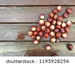 Collection Of Conkers Left On...