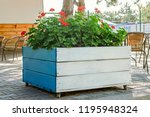 large wooden pot with red... | Shutterstock . vector #1195948324