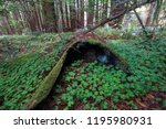 Green Clovers Around Mossy...