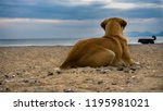 the dog on the beach watching... | Shutterstock . vector #1195981021