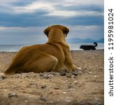 the dog on the beach watching... | Shutterstock . vector #1195981024