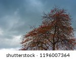 red autumn leaves on a tree...   Shutterstock . vector #1196007364